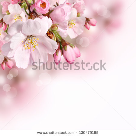 stock-photo-spring-border-or-background-with-pink-blossom-130479185